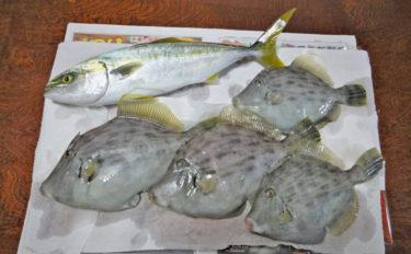 手こぎボートで気ままな釣り満喫 イナダ3尾にカワハギ4尾【神奈川】