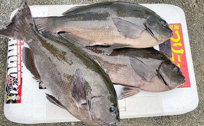 沖磯でのフカセ釣りで47cm頭にメジナ3尾 型に満足!【西伊豆】