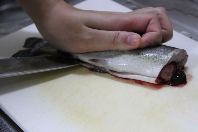管理釣り場で釣ったニジマスの下処理方法徹底解説 冷凍保存も可能!