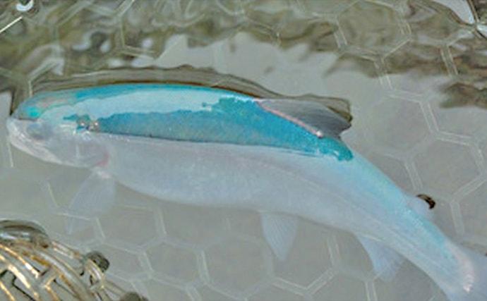 管理釣り場で狙えるサカナの種類を紹介 魚種の釣り分け方も解説