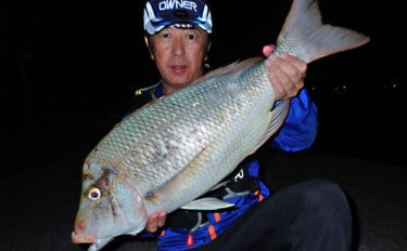 陸っぱりカゴ釣りで6kg超えの大型含みタバメ3尾キャッチ【上甑島】