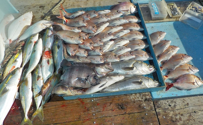 【愛知県】沖釣り最終釣果 ジギングでブリサイズ含み青物好調!