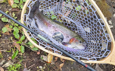 クリアウォーター&水温低下でスレたトラウトをテンカラ釣りで攻略