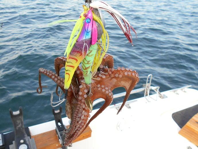 【2019明石沖】美味『秋タコ』釣りのキホン 実釣で3kg手中も大脱走?