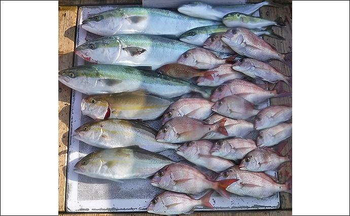 【愛知】沖釣り最新釣果 ウタセ五目が好調でイシダイやカワハギなど