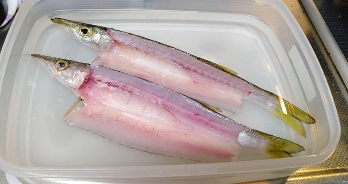 【釣果レシピ】カマスの一夜干し:釣り場で『サバ折り』をしておこう