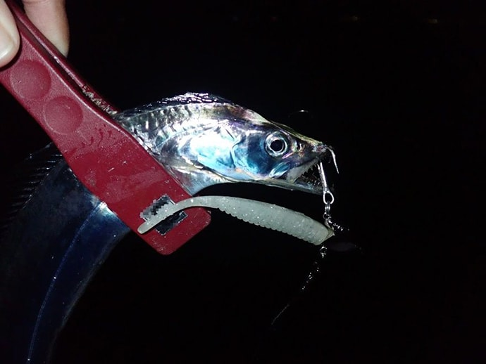 波止リレー釣行楽し ワインドで1m超タチウオ&ショアジギでハマチ!