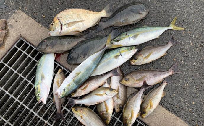 秋磯フカセ釣りで釣果多彩 向かい風&二枚潮対策は「スルスル」仕掛け
