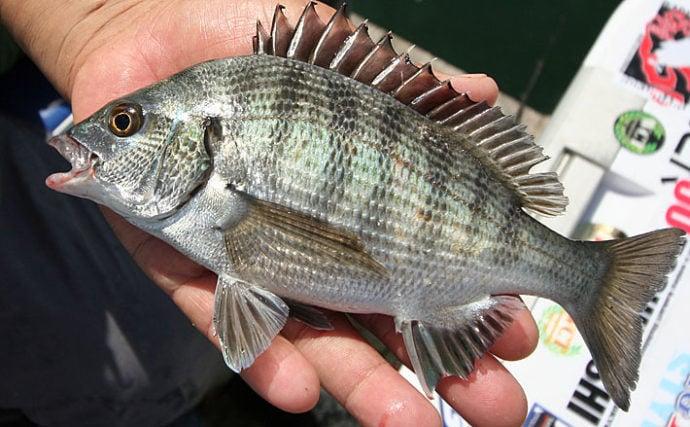 入門者必見『筏かかり釣り講習会』密着取材 名手に学ぶカカリ釣り