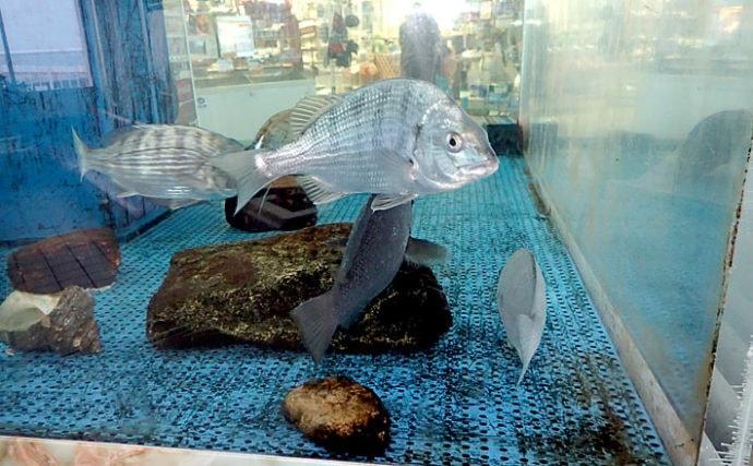釣った海水魚を飼育してみよう】準備編:サカナの捕獲について | TSURINEWS