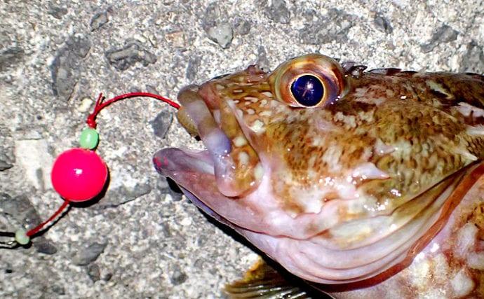 晩秋~冬の最強釣法『波止の穴釣り』攻略法 効率良い釣り方を伝授