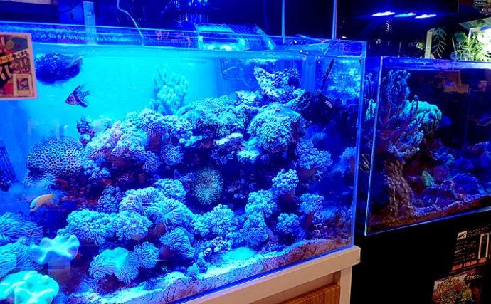 多様化する『水槽』の世界 「コケ」や「岩」で世界観を表現することも