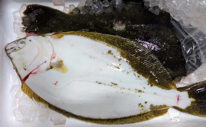 水産会社のプロが教える「おいしい旬魚」の見分け方:『ヒラメ』