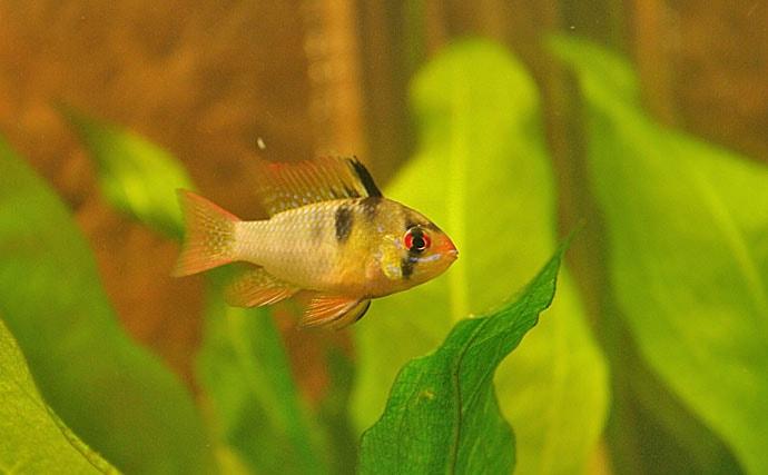 鑑賞魚飼育の強い味方「ブラックウォーター」を解説 見た目は泥水?