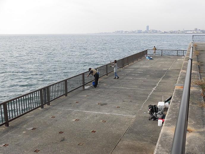 乗っ込みカレイ好釣り場:明石海峡大橋下 50cm超イシガレイも