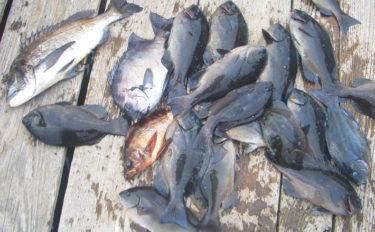 沖磯フカセ釣りで寒グレを狙う 本命サイズ上がらずも好ゲスト【大分】