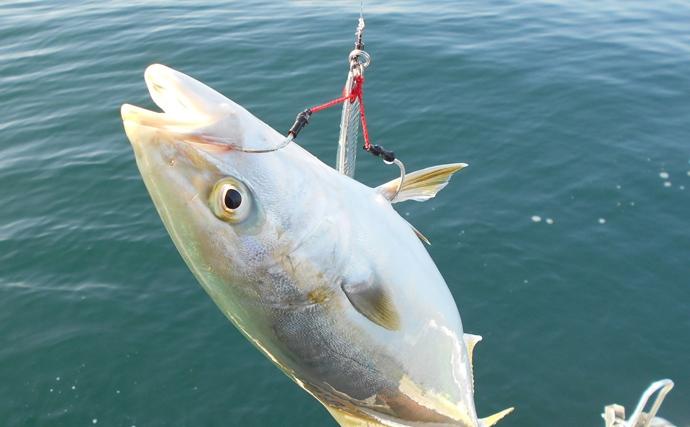 ボートジギングでブリ狙い 活性と釣魚サイズは反比例?【明石沖】