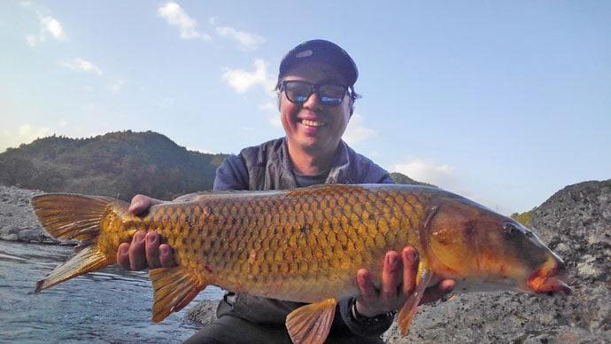 ブッコミ釣りで70cm級の巨ゴイが連続ヒット【長良川・揖斐川】