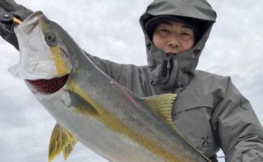 【響灘】落とし込み最新釣果 エサ付き良好で青物クーラー満タン釣果