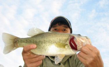 初場所でのバス釣りで41cm本命をハンドランディング【長良川】