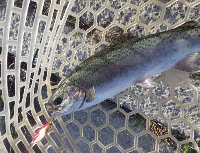 初心者がエリアトラウトで1日10匹を釣る方法【北方マス釣り場】
