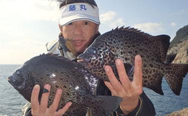 イシガキダイが高活性 1.3kg頭に1㎏級を3尾【鹿児島・上甑島】