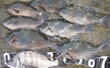 磯フカセ釣りで43cm頭にメジナ&クロダイの好釣果【千葉・西川名】