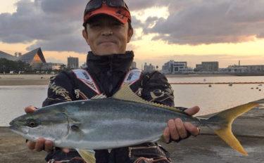 沖堤防ノマセ釣りで68cmメジロ エサは現地調達【須磨一文字堤防】