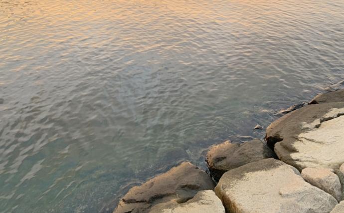 阪神湾奥にイワシ回遊中 ベイトについたシーバス&青物をルアーで狙う