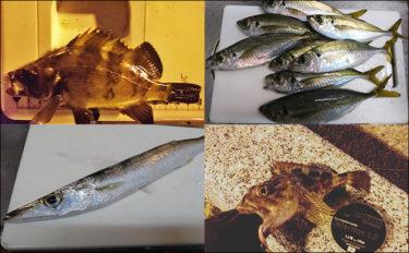 人気釣り場『清水港』 冬にオススメ陸っぱりライトゲーム対象魚種4選
