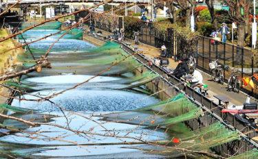【関東】年末年始オススメ釣り場:大横川親水公園魚つり場 フナ釣り満喫