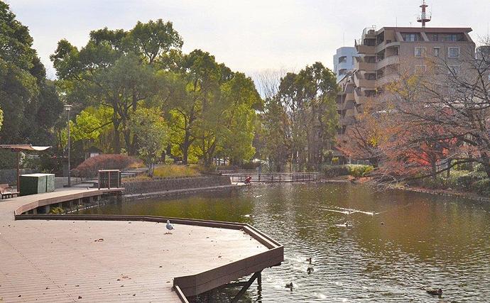 【関東】年末年始オススメ釣り場:平和の森公園 手軽に淡水小物釣り