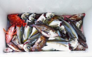 【中部】年末年始オススメ釣りもの:多彩な魚種が釣れるサビキ五目