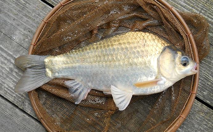 【関西】初釣りオススメ釣り場3選:新ベラ狙いの管理釣り池編