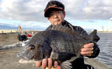 冬の『落とし込み』チヌ釣りの状況を解説 まだヘチ&上層での釣り成立か