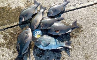 水温低下のタフな磯フカセ釣りを攻略 試行錯誤を楽しむ【和歌山・南紀】