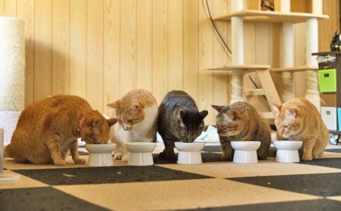 ネコへのお年玉に『マグロ』は厳禁? 愛猫とサカナのおやつの関係性