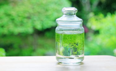 短い冬休みでも始められる『ボトルアクアリウム』 瓶の中に癒しの空間を創作