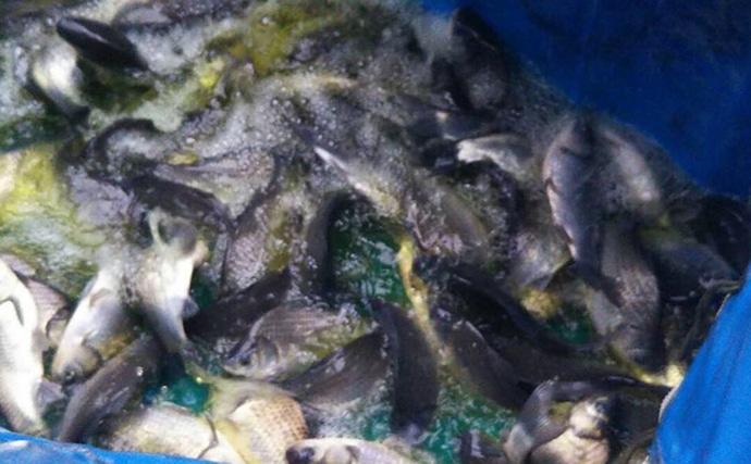 ヘラブナ釣り初心者入門 『両グルテンの宙釣り』で新ベラ攻略(第6回)