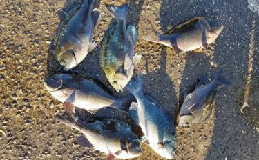 磯フカセ釣り好機到来 沖の浅ダナ狙いで良型キャッチ【和歌山・市江】