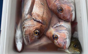 【関西】年末年始オススメ釣りもの3選:沖釣り編 テンビン釣りでマダイ