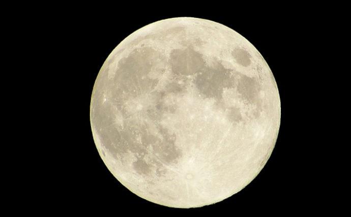 海のサカナと月の深い関係について 潮汐は捕食と産卵に大きく影響