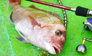 海釣りで狙える「縁起が良い魚」4選 全国で愛される『年取り魚』