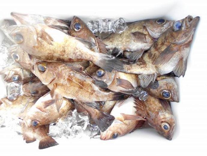 【大分・熊本】沖釣り最新釣果 各地で指8本級ドラゴンタチウオが強襲