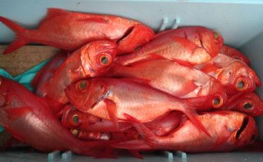 寒くなったら深海釣り 1投で高級魚キンメダイが12匹【隆栄丸】