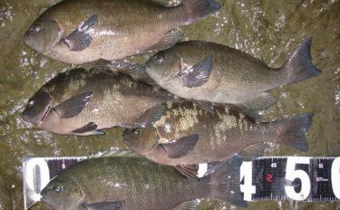 真冬の堤防フカセ釣りで30cm級メジナと戯れる【千葉・西川名港】