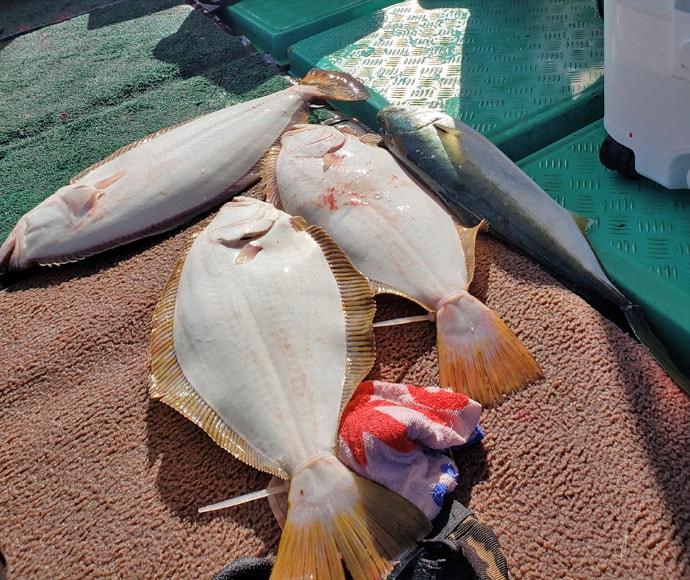 【玄界灘】落とし込み&泳がせ最新釣果 102cmデカマサ&8kgブリ