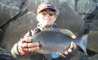 沖磯フカセ釣りで37cm頭にグレ16匹 高水温で高活性【和歌山・串本】