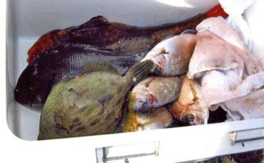 沖磯フカセで五目釣り 本命クロ不在もシマアジやカワハギなど【米水津】