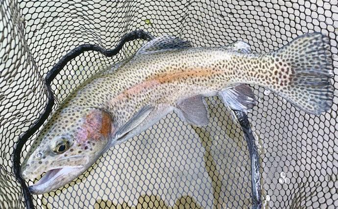 管理釣り場で『ミノーイング』しばり 45cm頭にニジマス手中【鱒蔵】